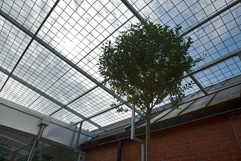 Litet träd på innergården. Johan Thurfjell, Egen ingång, 2014