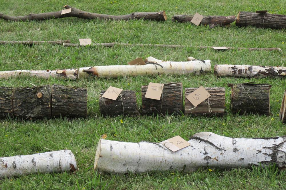 Delar av söndersågade trästammar ligger uppradade i gräset. Delarna har märkningslappar. Runo Lagomarsino, A country's landscape