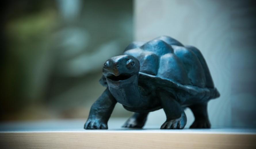 Skulptur av en sköldpadda. Christoffer Paues, All Världens Djur