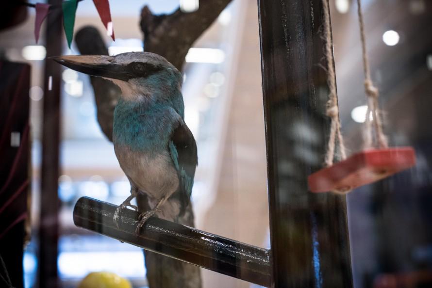 Liten skulptur av en fågel med blått bröst. Christoffer Paues, All Världens Djur