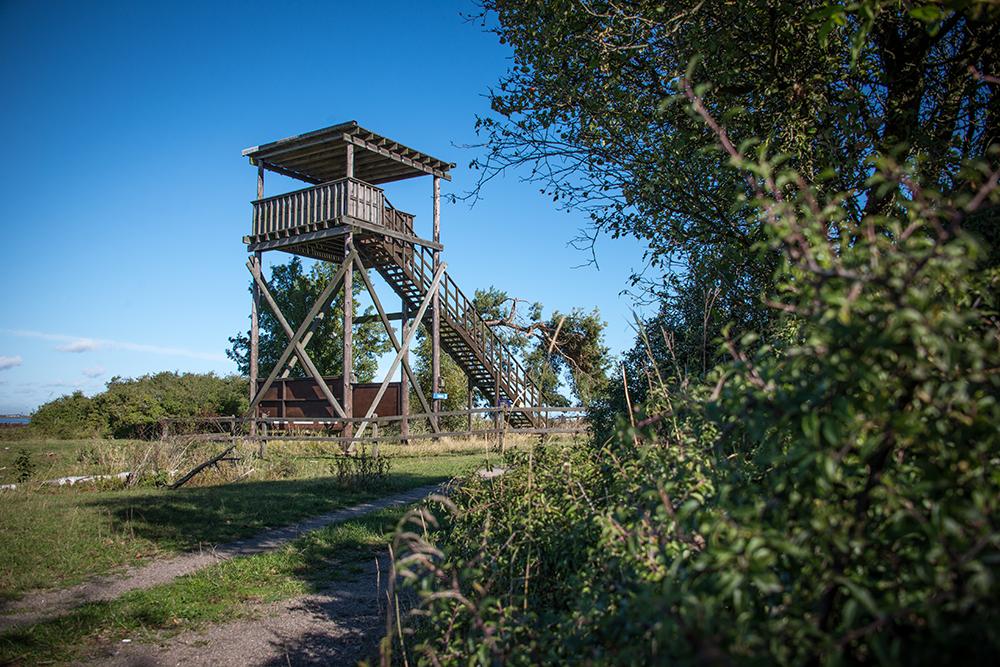 Det snickrade fågeltornet vid Beijershamn på Öland. Himlen är blå, i förgrunden ett buskage. Pia Sandström, Minnet Orden Marken...