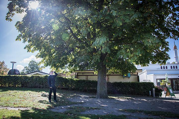 En man står på en gräsmatta under en lummig kastanj och tittar upp mot bladverket. I bakgrunden en moské. James Webb, Theres no place called home