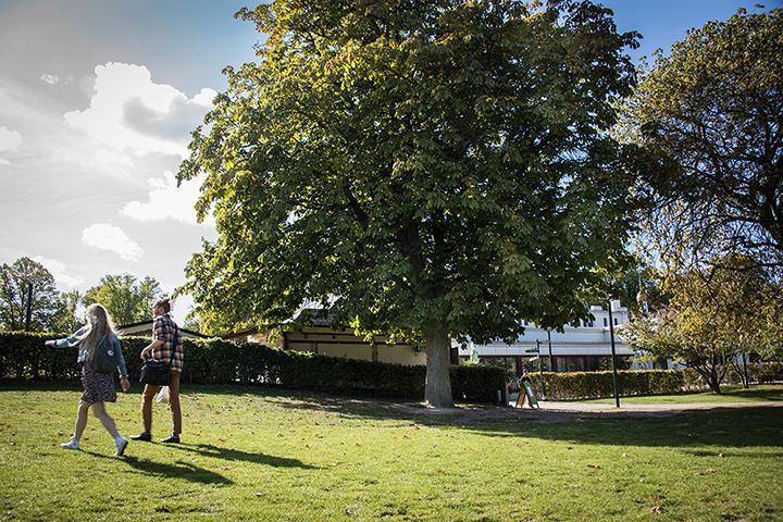 Två personer går över en gräsmatta framför en lummig kastanj. I bakgrunden häckar och hus. James Webb, Theres no place called home