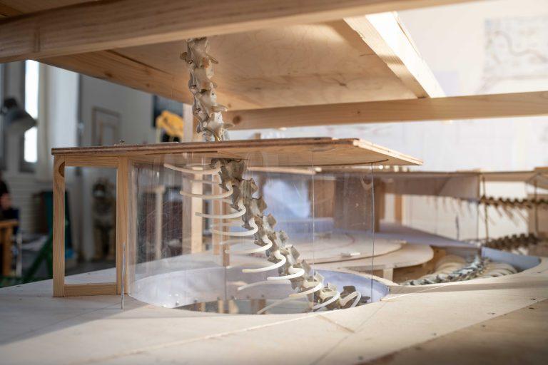 En modell av en byggnad där ett ormskelett som går mellan två våningar.