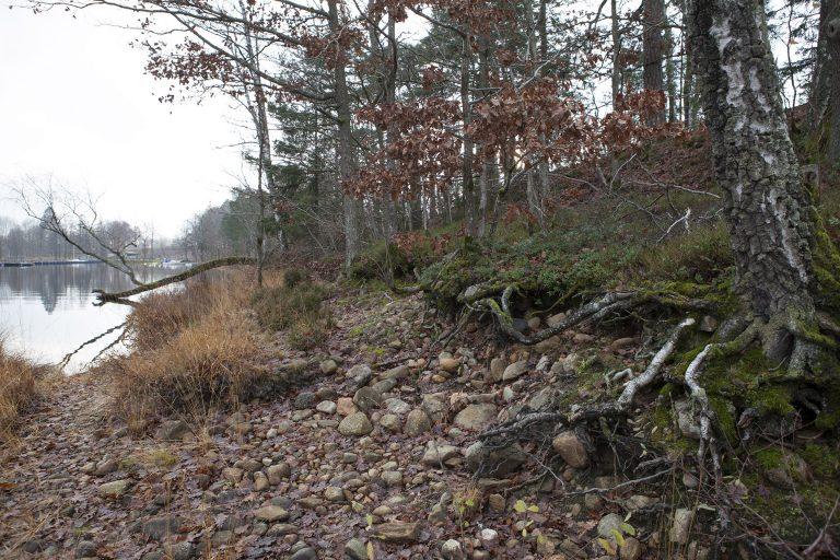 Träd och stenar vid ett vattenbryn