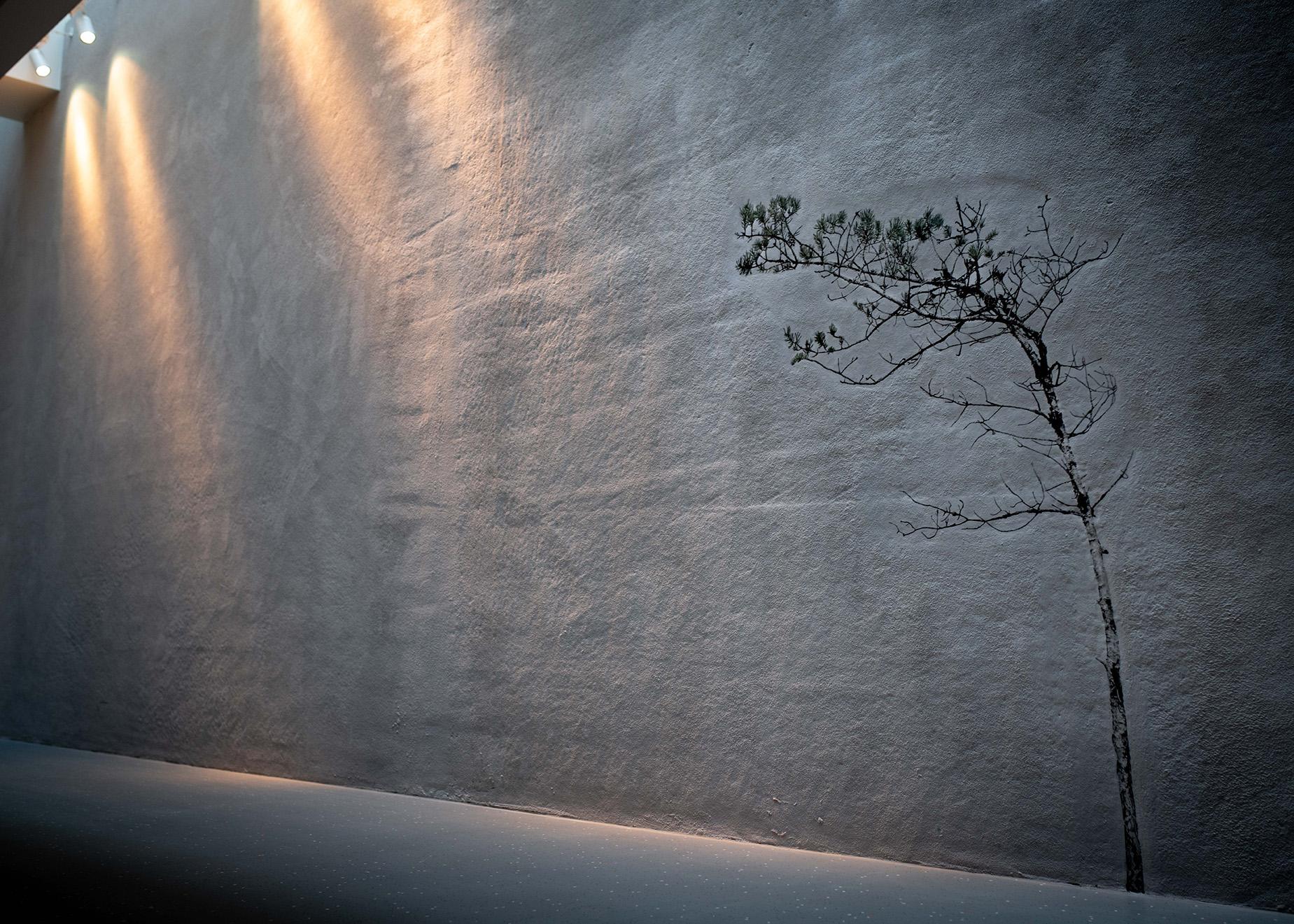 En bild av en tall på en vägg som är belyst snett uppifrån.