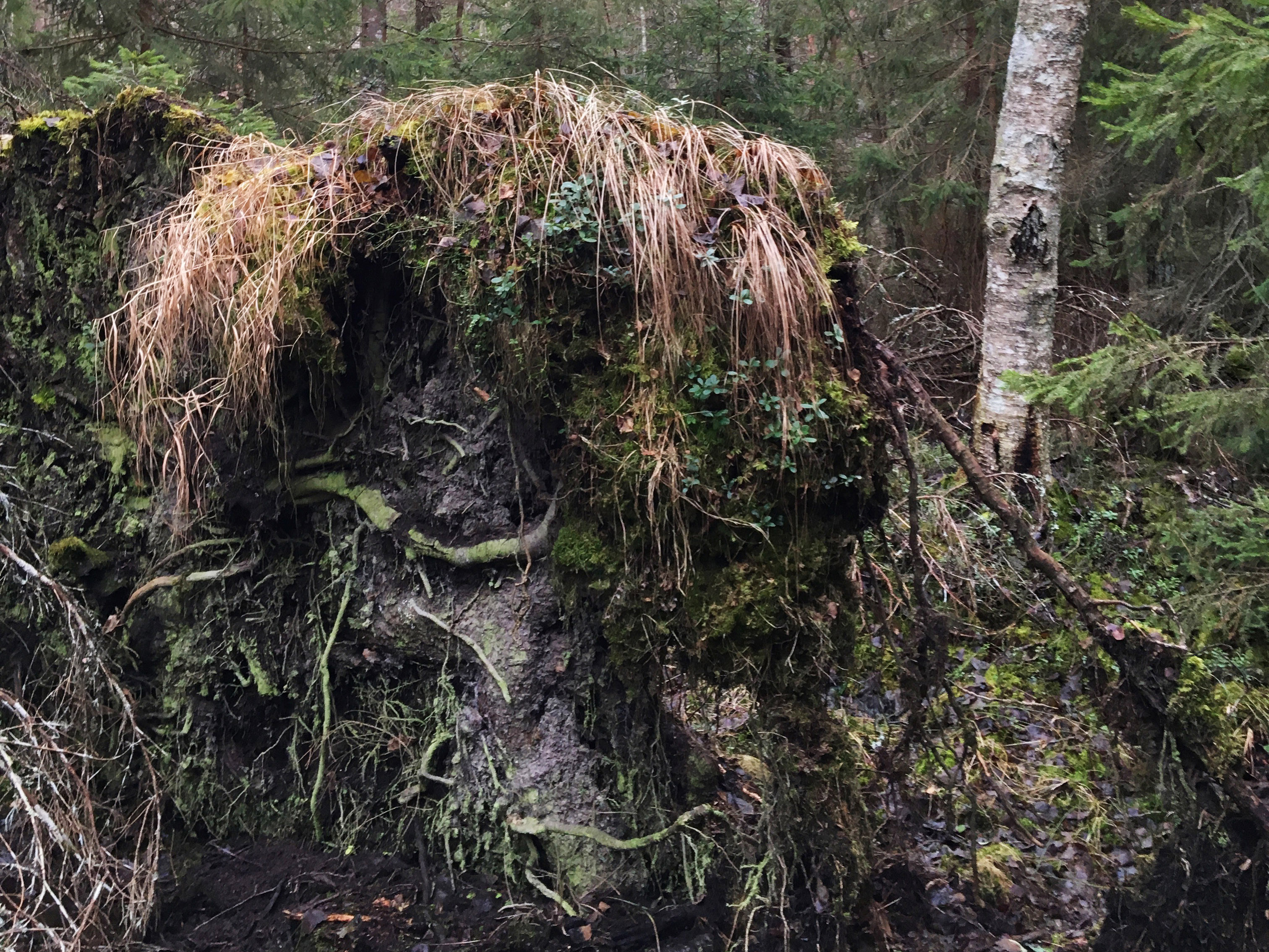 En jordhög i en skog