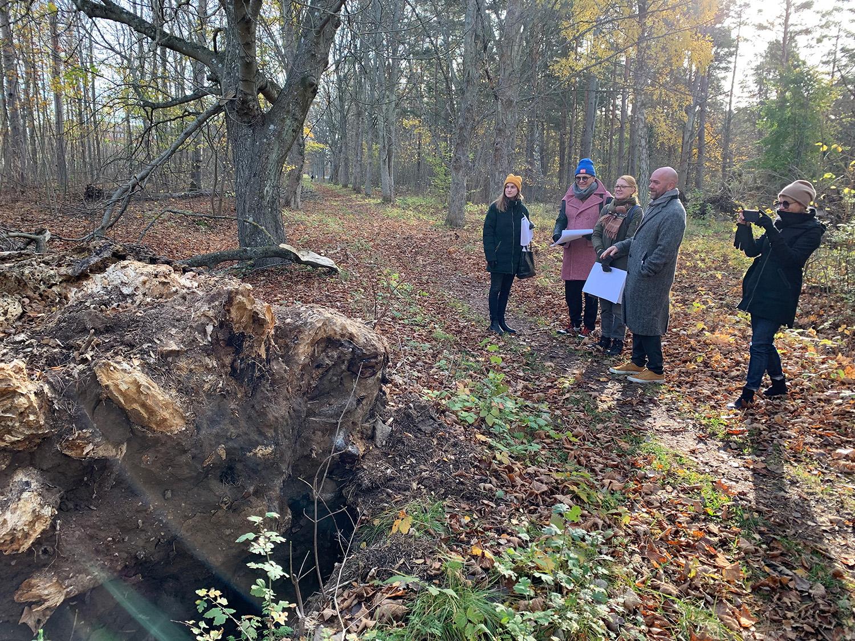 En grupp personer tittar på en fallen trädrot ute i naturen.