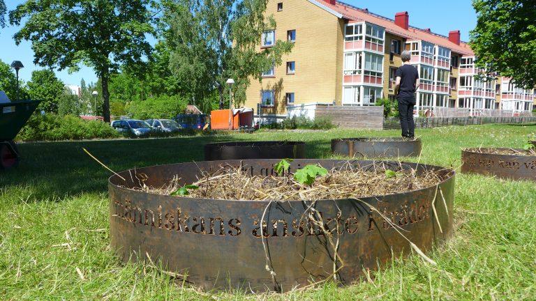 Rund form i gjutjärn fylld av jord på en gräsmatta. Trevåningshus i bakgrunden.