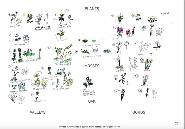 Målningar av olika sort växter på ett vitt ark.